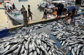Pengusaha Italia Incar Ikan Tuna Indonesia